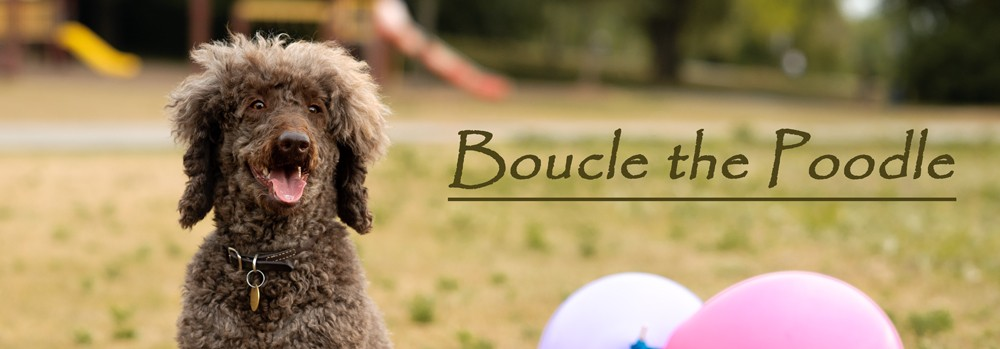 Boucle the Poodle