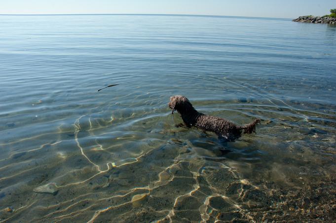 _JAS5644-WEB-Boucle's-first-swim
