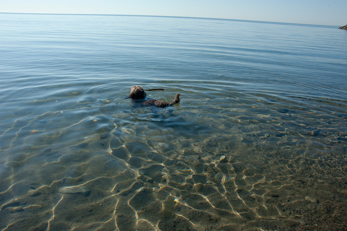 _JAS5648-WEB-Boucle's-first-swim