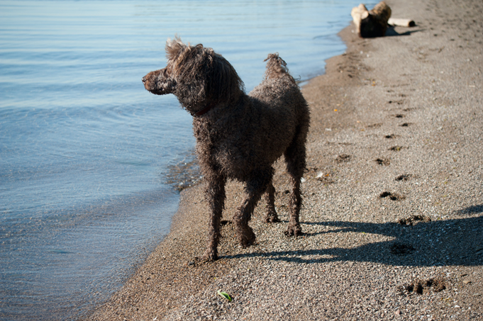 _JAS5676-WEB-Boucle-after-swimming-lesson