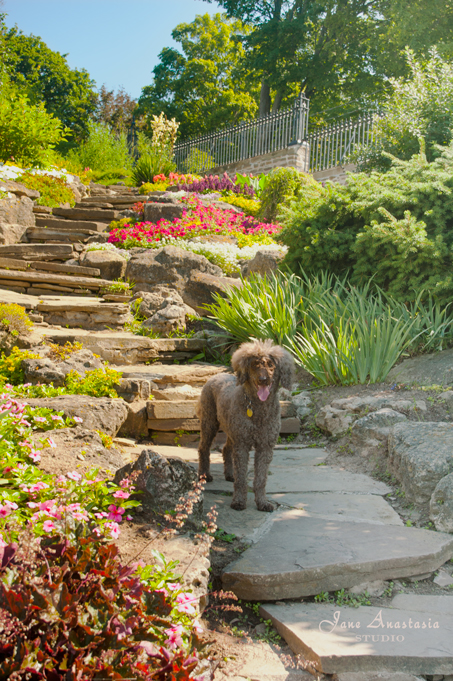 _JAS5764-WEB-Boucle-on-stone-garden-steps-3a