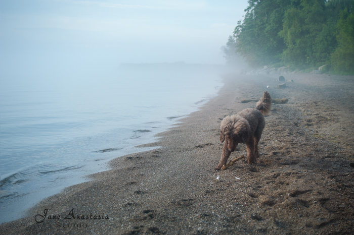 _JAS7133-WEB--Boucle-on-foggy-beach