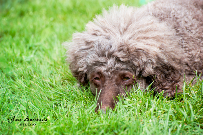 _JAS8215-WEB-Boucle-in-grass