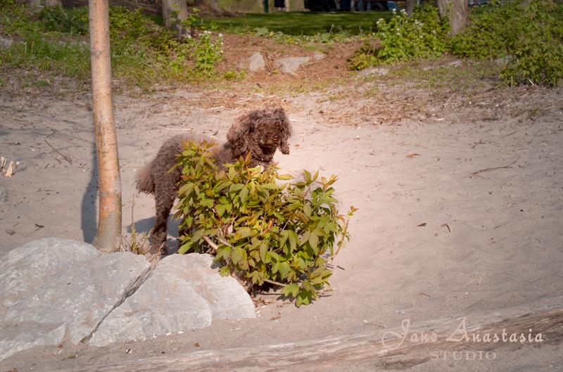 _JAS1039-WEB-Boucle-behind-bush