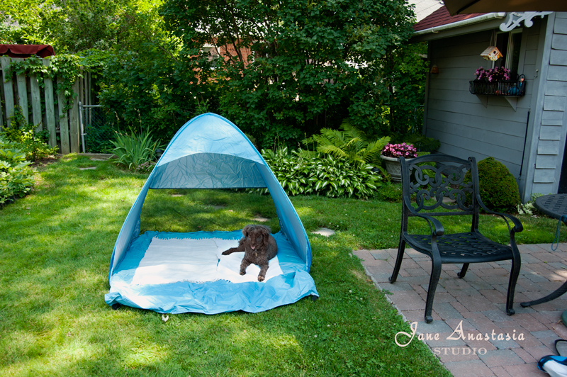 _JAS2670----WEB-Boucle-in-shade-tent---JS